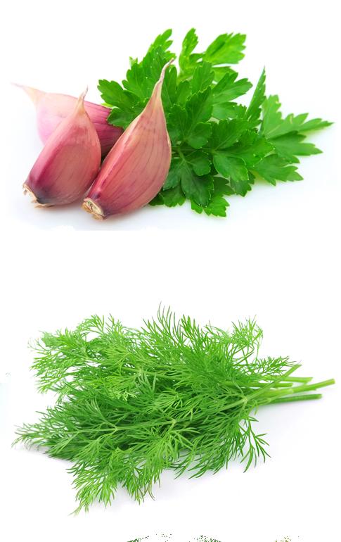 herbs2-1